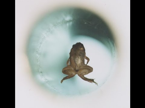 Everything Is Magnetic! Moving Water With Magnets And Levitating Frogs