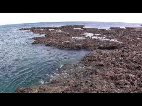 In the reef edge of AUN -アウン浜のリーフエッジにて-