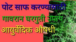 पोट साफ होण्यासाठी गावरान घरगुती उपाय | आयुर्वेदिक औषधी वनस्पती | stomach cleaning part:7