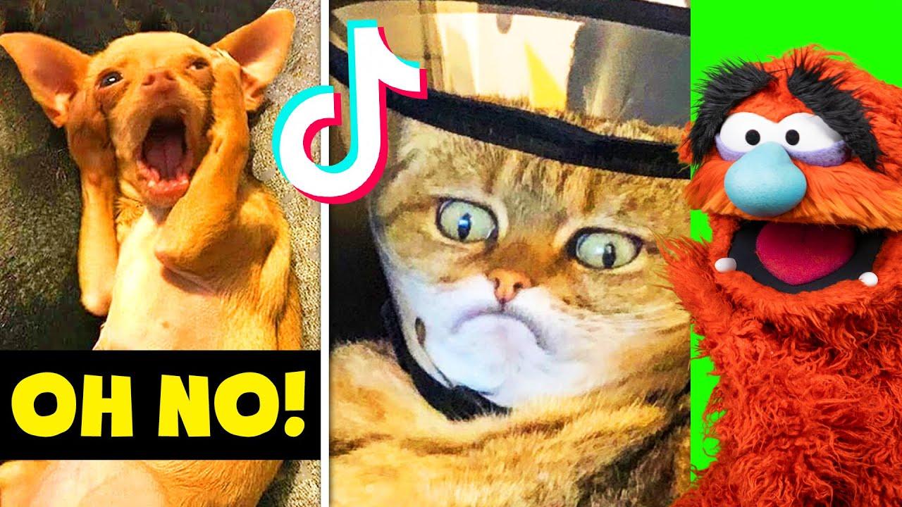Best PETS of TIKTOK Fails Caught on Camera | Unlucky Animals!