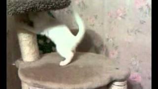 Мирабель 2 месяца(Это видео загружено с телефона Android., 2011-08-30T23:03:57.000Z)