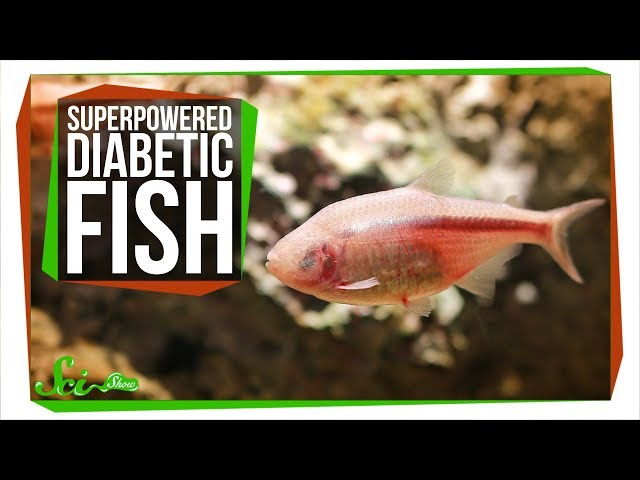 Pain-Killing Hunger and Superpowered Diabetic Fish