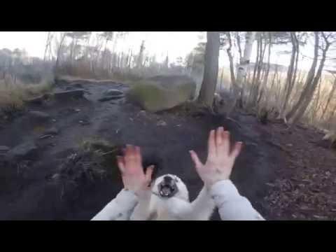 Knick Knack Paddywhack, Give a Wolfdog High Five