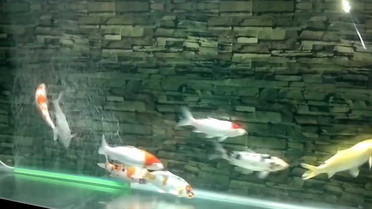 Bể cá Koi+May Bơm DF 1300.mp4 - YouTube