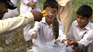 The ratcatcher of Peshawar faces uphill battle
