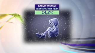 видео Температура и ее влияние на состояние тел