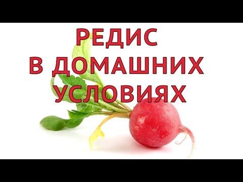 """Букет """"Радуга чувств"""" от Flower-shop.ruиз YouTube · Длительность: 54 с  · Просмотры: более 2.000 · отправлено: 29.06.2012 · кем отправлено: Flower-shop.ru"""