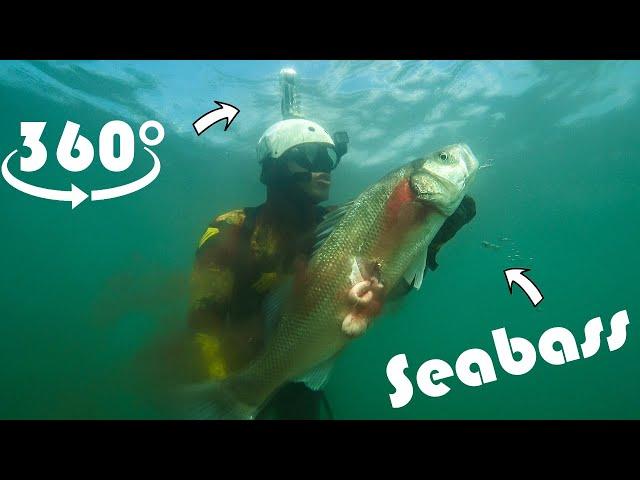 Spearfishing Shallow Seabass Full 360° |Spearfishing Life 🇬🇷