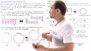 Restriction Enzymes and Recombinant DNA