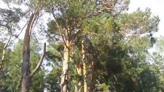 Алтайский край, природа(Алтайский край, природа., 2015-06-16T15:34:03.000Z)