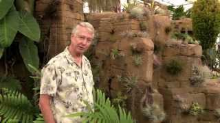 Paul Isley / Rainforest Flora, Inc. - Tour Retail Nursery - Aug 11 2015