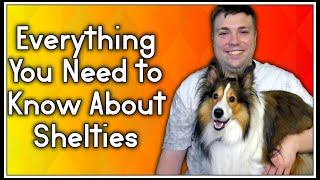 Everything You Need To Know About Shelties (Shetland Sheep Dog) MumblesVideos