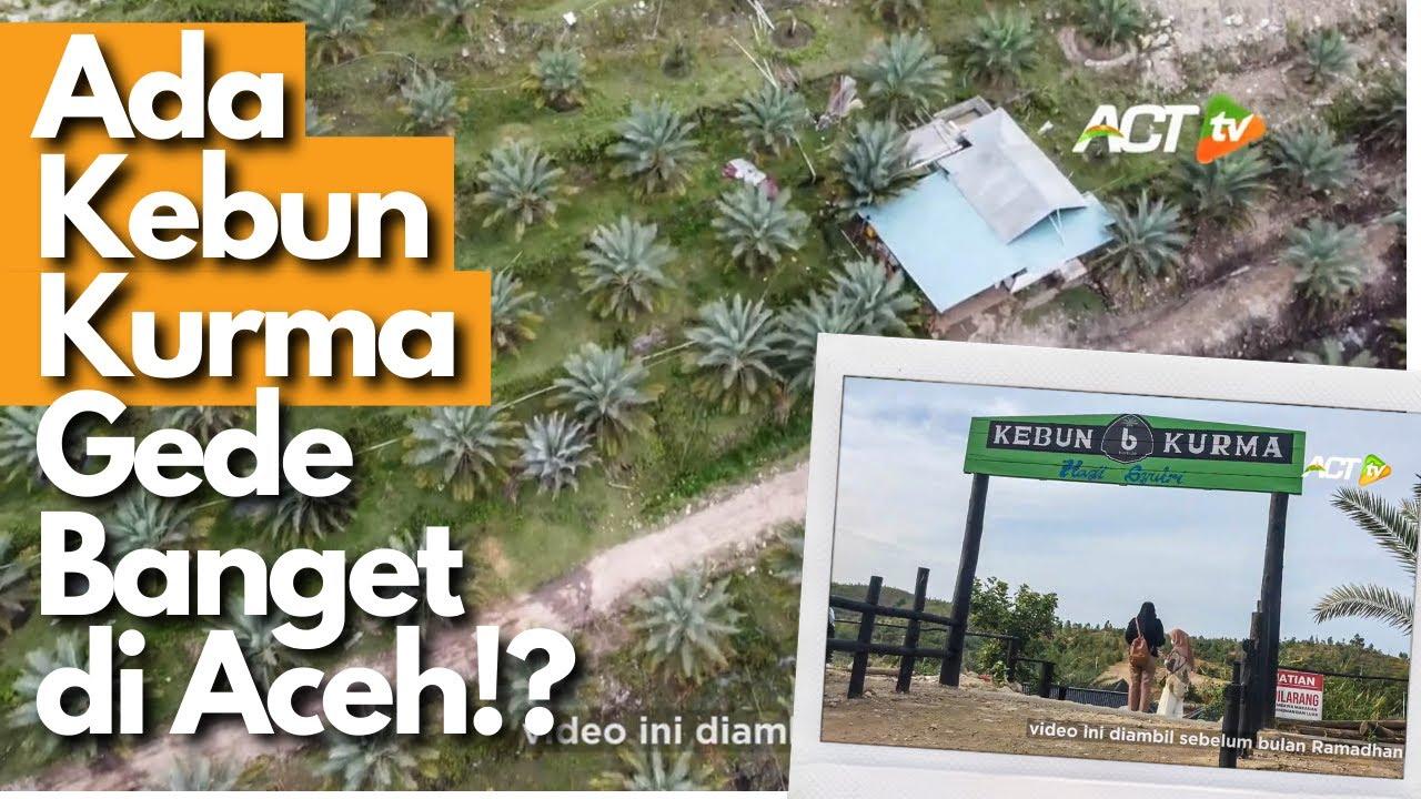 Beneran Ada Kebun Kurma Terbesar Di Aceh Ajaibnya Kurmanya Tumbuh Dan Berbuah Youtube