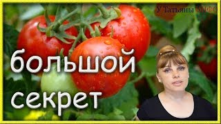 По ВЕДРУ ПОМИДОРОВ (томатов) с КУСТА обеспечено!!!