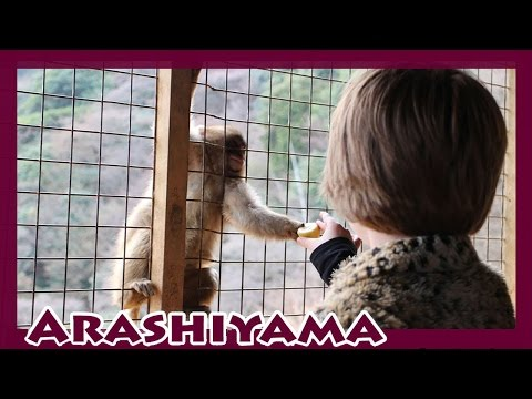 Kyoto Day Three Japan Travel Vlog- Arashiyama - Day 640 | ActOutGames
