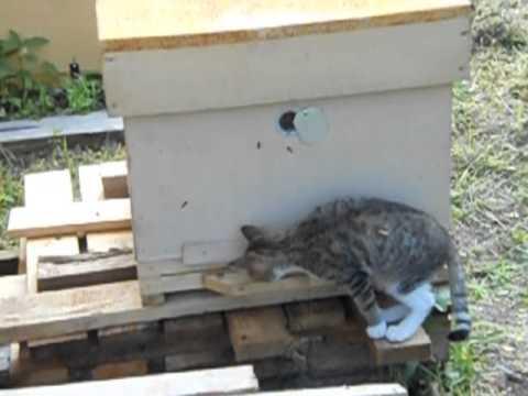 Кот Васька и пчёлы