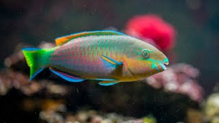 Relaxing Aquarium Fish Tank Sounds  🐟