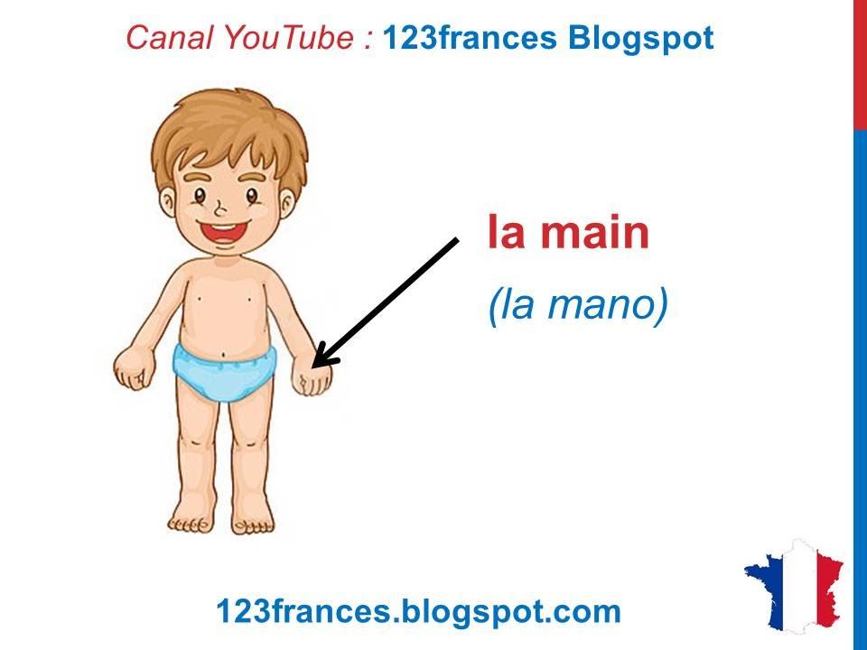 Curso de francés 21 - PARTES DEL CUERPO humano en francés ...