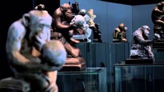 Ape Culture / Kultur der Affen