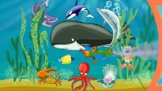 Морские животные.  Развивающий мультик для детей (мультфильм)
