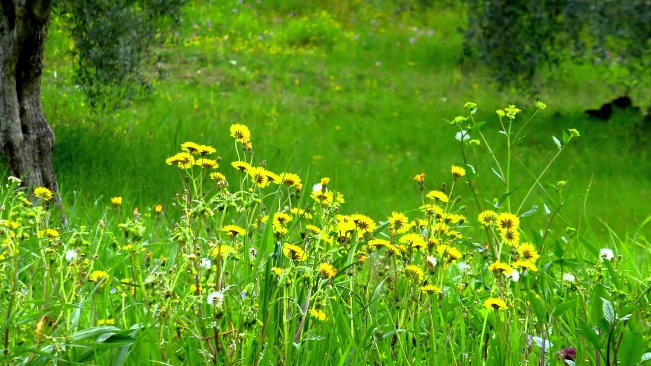 Umbria i colori della primavera full hd youtube for Immagini sfondo desktop primavera