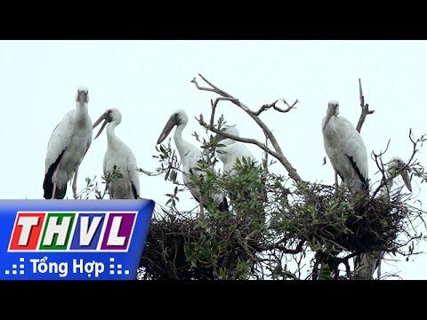 THVL   Ký sự truyền hình: Mùa chim làm tổ