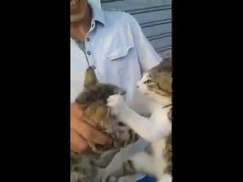 Deux Chats Algériens!