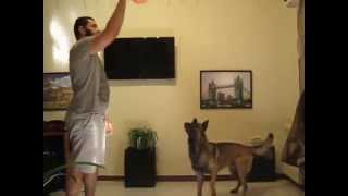 How To Play Volleyball With Your Dog,indoors.