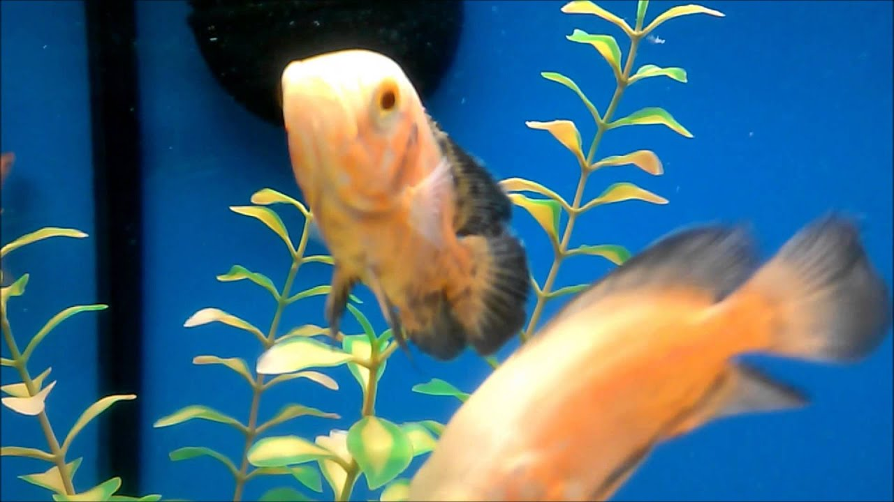 Petco run and solving the mystery of my missing fish youtube for Fish at petco