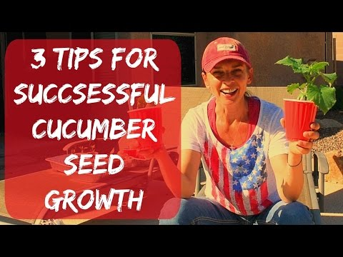How To Plant Cucumbers From Seeds - Organic Vegetable Garden In Arizona - Container Gardening