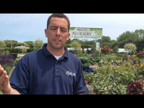 Q&A Tuesday with Stephen Barlow Episode 008: What's Growing in My Yard?
