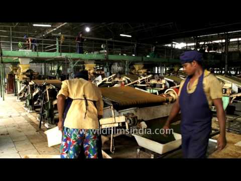 Tea Factory From British Time Updated, Functional And Efficient In Assam