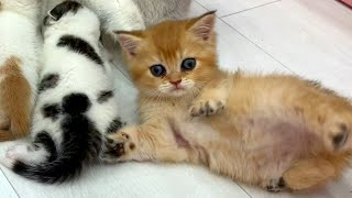 Will a cat adopt someone else's kitten?
