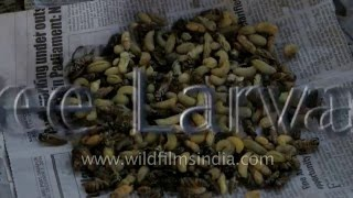 Top Ten Weird Foods of India