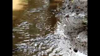 Последствия ликвидации разлива нефти в районе Козьмино 29.08.2014(, 2014-09-01T06:37:36.000Z)