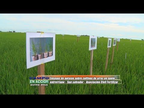 Maria Fernanda González San Juan - Gte Ejecutivo de Asoc.Civil Fertilizar - Ensayos de potasio sobre arroz en suelos de E.Ríos