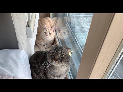 고양이들과 맞이하는 주말 아침