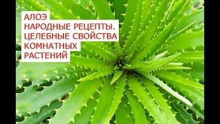 Алоэ народные рецепты.  Целебные свойства комнатных растений