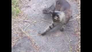 Кошки Мышки. Крутая Мышка. Видео - 1