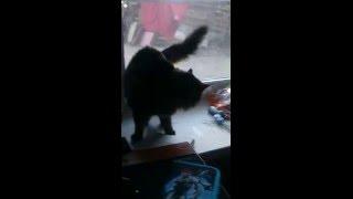 Реакция кошки на посторонний запах)))) Ржач))