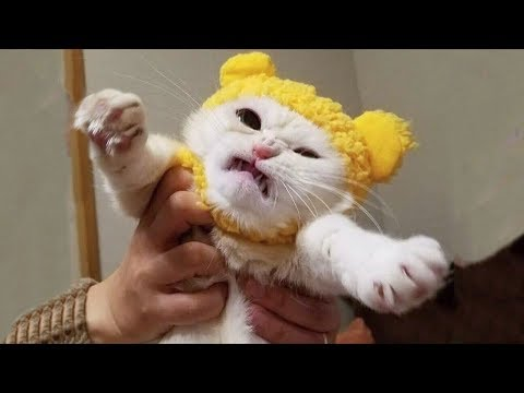 Funniest And Cutest  Dogs And Cats  Funny Pet Animals' Life