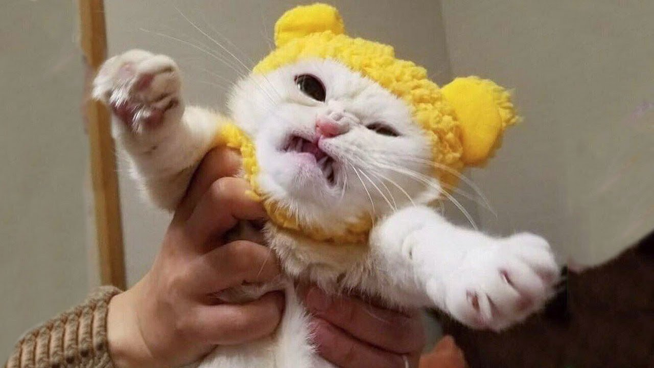???? Funniest And Cutest ???? Dogs And Cats ???? Funny Pet Animals' Life ????