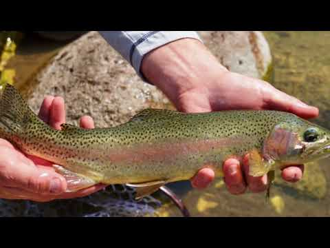 Wyoming Ranches For Sale - Paint Rock Canyon Fishing & Hunting Teaser