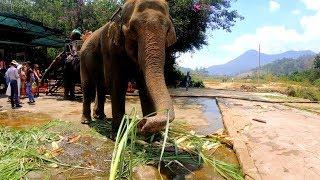 Далат-французский город во Вьетнаме. Водопады, горы , слоны и буддийские пагоды.