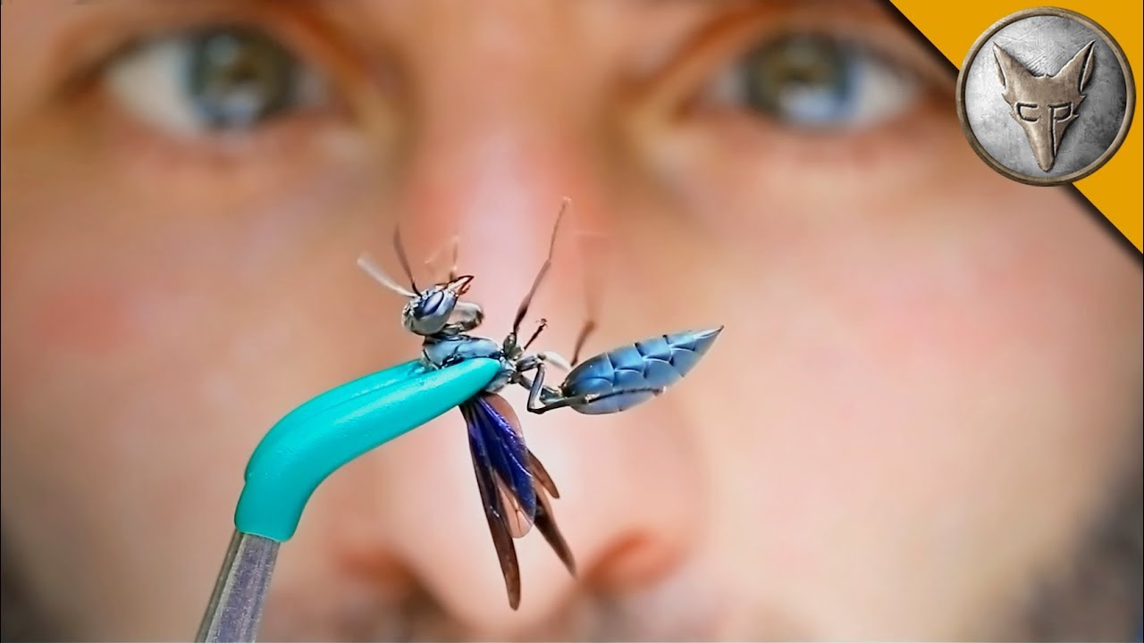 warrior-wasp-adventure