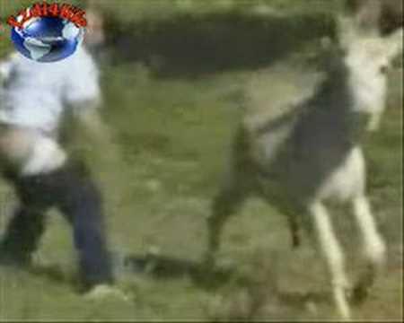 man with donkey thumbnail