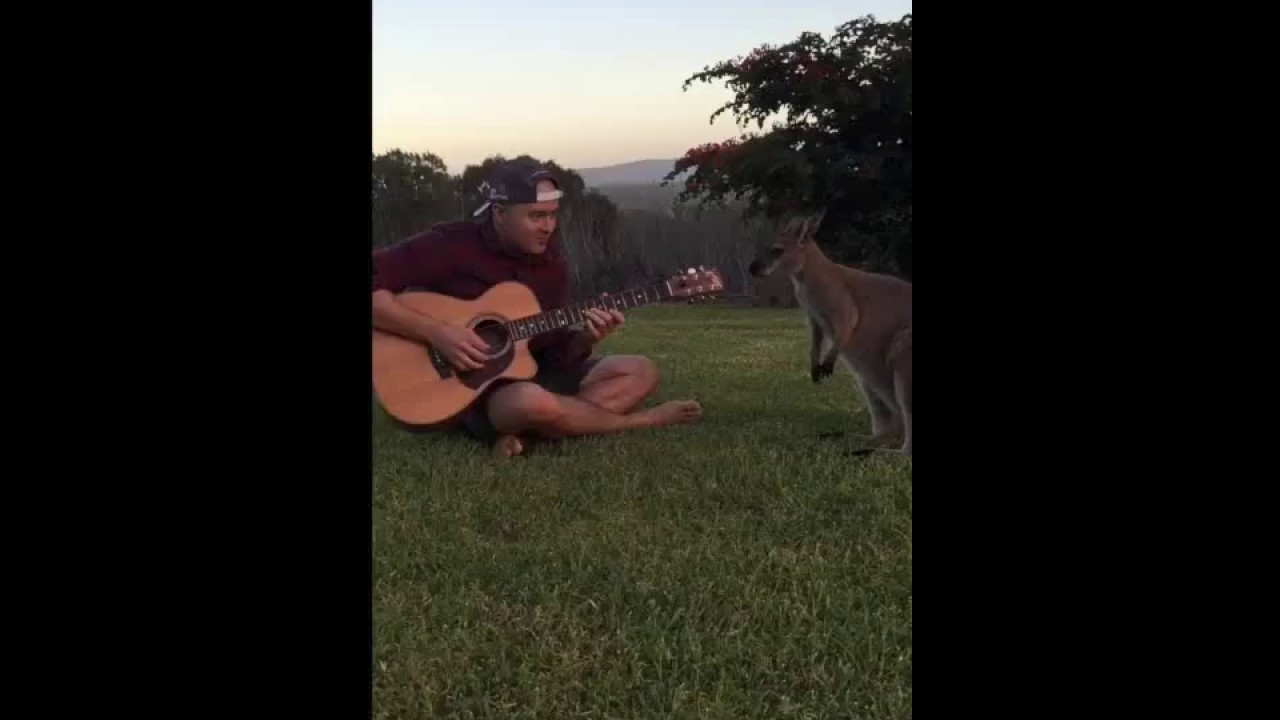 Uli's Jump feat. Wendy The Wallaby