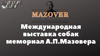 Выставка собак в крокус экспо, Мазовер. Dog show, Mazover Memorial. Выставки а Москве. Амстафф клуб