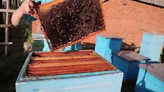 Как узнать что пчёлы в роевом состоянии не заглядывая в улей.