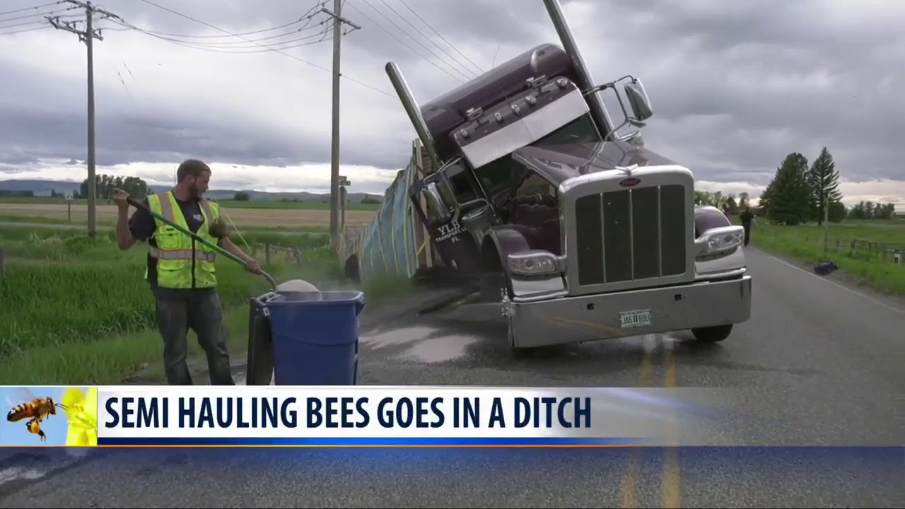 A semi-truck crashed carrying 40,000 pounds of bees | WQAD com